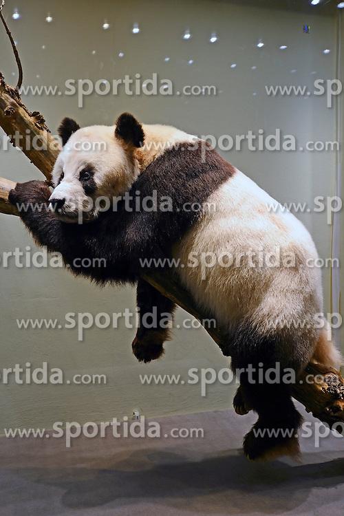 15.03.2016, Museum fuer Naturkunde, Berlin, GER, Naturkundemuseum Berlin, im Bild Praeparat des Panda Bao Bao (Ailuropoda melanoleuca) // Exhibits in the Natural History Museum Museum fuer Naturkunde in Berlin, Germany on 2016/03/15. EXPA Pictures © 2016, PhotoCredit: EXPA/ Eibner-Pressefoto/ Schulz<br /> <br /> *****ATTENTION - OUT of GER*****