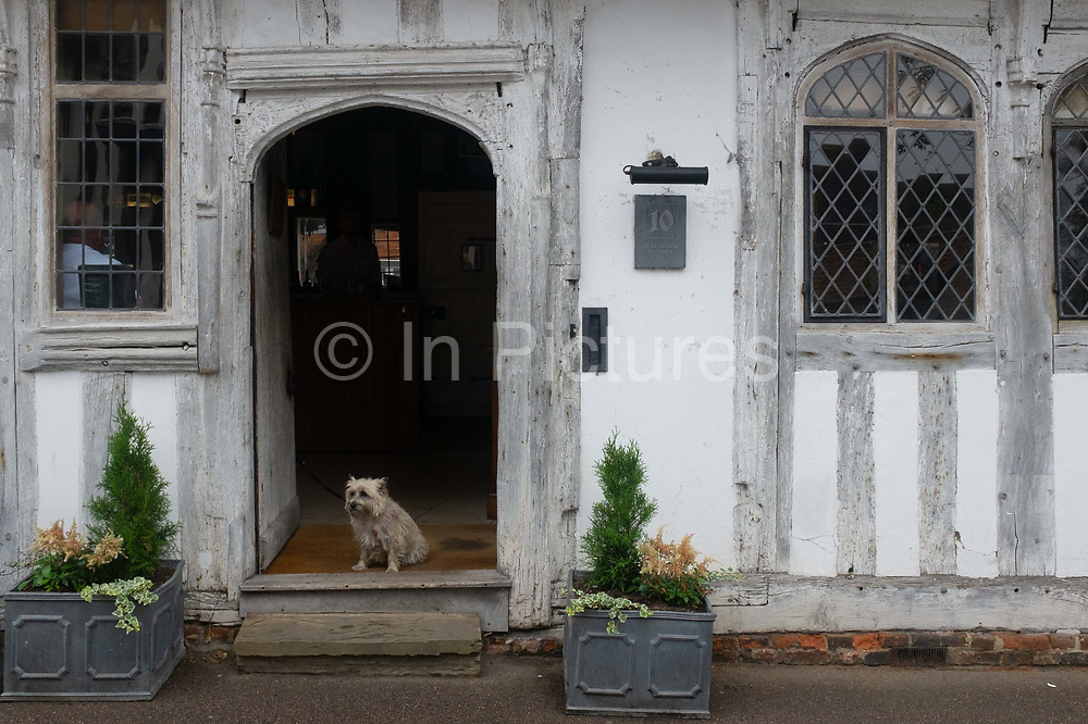 A pet dog sits on the step of a pub at 10 Lady Street, on 9th July 2020, in Lavenham, Suffolk, England. By the late 15th century, the town was among the richest in the British Isles, paying more in taxation than considerably larger towns such as York and Lincoln. Several merchant families emerged, the most successful of which was the Spring family.  The wool trade was already present by the 13th century, steadily expanding as demand grew. By the 1470s Suffolk produced more cloth than any other county.