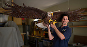 """Artist Mike Schaefer poses for a portrait with a life-sized wooden eagle entitled """"Pursuit"""" in his home studio in McKinney on Wednesday, March 27, 2013. (Cooper Neill/The Dallas Morning News)"""