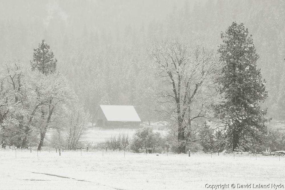 Swamp Barn, Oak Trees, Genesee Valley Ranch, California Mountains, Winter Scenes, Sierra Nevada Mountains, Mountain Ranch, Mountain Valley Living, fresh snow