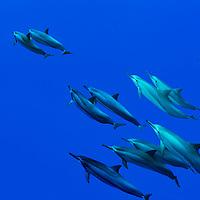 Marine Mammals and Reptiles