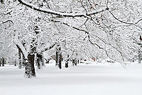 Snowy trees in a winter wonderland park