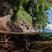 Half and half image of an island in Papua New Guinea. We see a large seastar under the water and jungle and volcanoes above water.