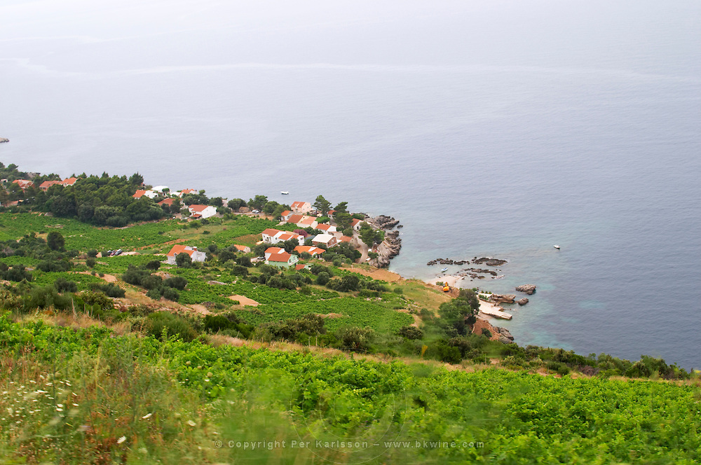 The Dingac village seen from the hillside across vineyards on the steep slope. Potmje village, Dingac wine region, Peljesac peninsula. Dingac village and region. Peljesac peninsula. Dalmatian Coast, Croatia, Europe.
