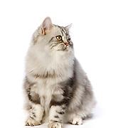 20201207 Kaitlyn Cats