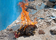 Rooseter burnded alive by a voodoo priest in the National Cemetery of Port-au-Prince. Haitian Voodoo is a syncretic religion that originates in  Haiti based upon a merging of the beliefs and practices of West African peoples with Arawakian religious beliefs, and Roman Catholic Christianity.