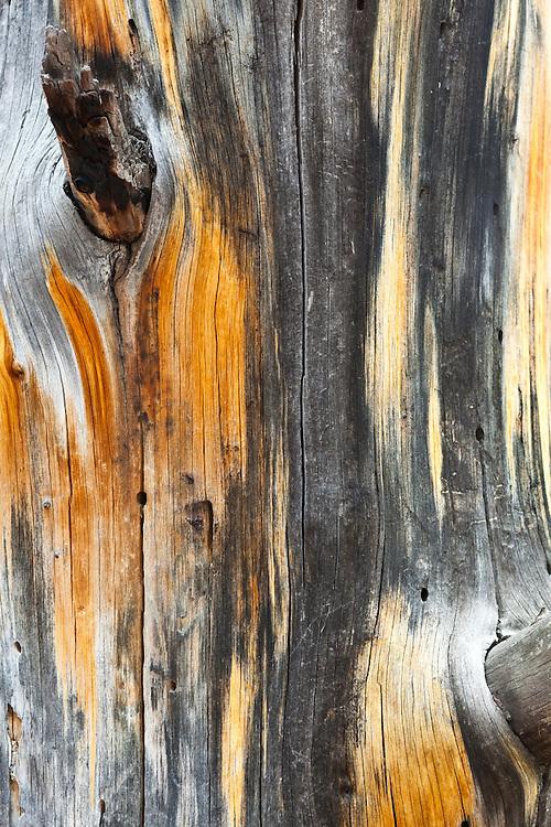 Patterns in dead wood, Lost Creek Wilderness, Colorado.