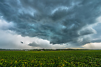 A turbulent sky moves above a soybean field near Tremont, Illinois. The gust front brought very strong winds that made it hard to take a steady picture. Seconds after this shot, it started raining heavily.