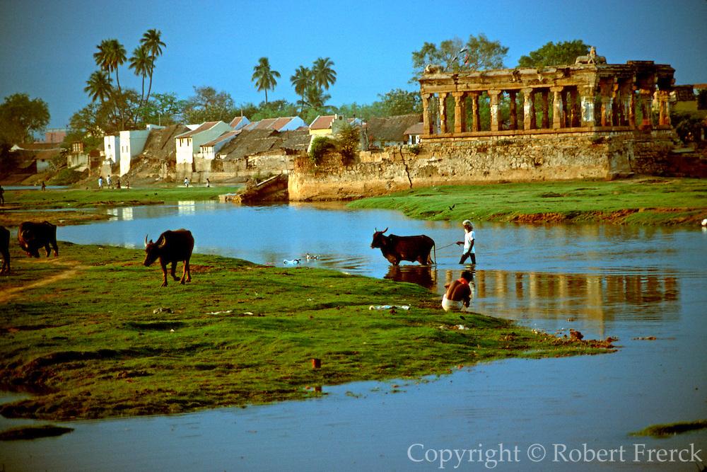 INDIA, TAMIL NADU a village near Madurai with island temple and farmer herding water buffalo across stream