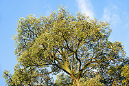 An ancient mango tree was left intact on the Fivelements property.