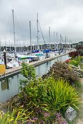 Richardson Bay Marina Sausalito Yacht Harbor