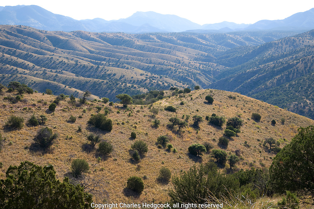 Near Rancho El Pinito in the Sierra San Luis, Sonora Mexico