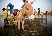 A boy fills a barrel with water to be carried with his donkey-pulled cart at the Dikunani dam in Savelugu, northern Ghana, on Friday March 9, 2007. The only of four water sources that has not completely dried out around Savelugu, the pond is used by hundreds of people daily who sometimes walk several kilometers to fetch water. Despite the presence of mesh filters available to people who come get water, cases of guinea worm in the area have gone up sharply in the recent months.