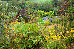 Autumn in the brick garden at Glebe Cottage with Rudbeckia fulgida var. deamii AGM, fennel, Aster 'Little Carlow' and Helianthus 'Lemon Queen'