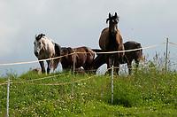 12.07.2009 gospodarstwo agroturystyczne w Malych Raczkach nad rzeka Rospuda fot Michal Kosc / AGENCJA WSCHOD
