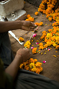 A man makes garlands from flowers to offer at the shrine in a Hindu temple Janakpuri, New Delhi, India
