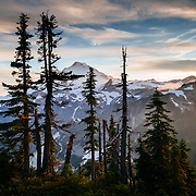 Rays of sunlight stream across the Cascade Range including Mount Baker silhouetting wind hammered fir trees.