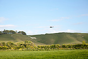 White horse in chalk scarp slope Cherhill, Wiltshire, England dating form 1780- helicopter