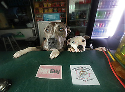 October 6, 2016 - Mcdonough, Georgia, U.S. - Shelby, left, and Camo, the dogs of skipper Robert Lineberger, 51, ride out Hurricane Matthew at Knuckleheads, a small shop at the St. Marys Waterfront Park beside the public boat ramp in Saint Marys, Ga. Lineberger became stranded waiting for a part for his 41-foot sailboat with engine troubles and the owner of the store said he and his dogs could take shelter there rather than risk riding the storm out in their boat at the nearby dock. (Credit Image: © Curtis Compton/TNS via ZUMA Wire)