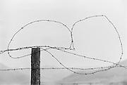 Barbed wire, cabbage, Molln, Austria, 1935