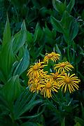 Wildflowers near Lake Irwin, Crested Butte, Colorado.
