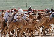 Camel racing in Al Ain in Abu Dhabi, United Arab Emirates