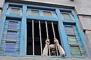 A Bihari laborer looks through a window in the village of Nesang in Himachal Pradesh, India