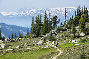 See the Coast Range from Overlord Trail on Blackcomb Mountain, in Garibaldi Provincial Park, British Columbia, Canada. The Resort Municipality of Whistler is popular for year-round  outdoor sports aided by gondolas and chair lifts.