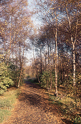 Sherwood Forest,