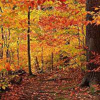 """Variegated Autumn""<br /> <br /> Step into the magic of autumn's golden delight!!<br /> <br /> Autumn Landscapes by Rachel Cohen"