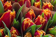 Flora - Bloemen en Planten   Flowers and Plants