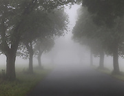 A country road with tree alley disappears into an early morning fog