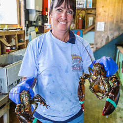 Sue Nelson, operations manager, sorting lobster at Potts Harbor Lobster in Harpswell, Maine.