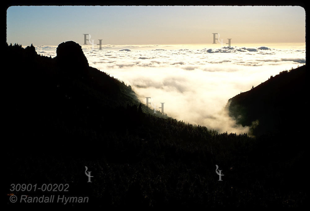 Stretching off to horizon, coastal clouds hug the alpine pine forests of Tenerife at sunset. Spain