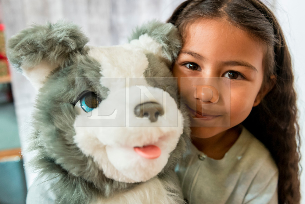 """© Licensed to London News Pictures. 14/11/2018. LONDON, UK. Ayva, aged 8, plays with Fureal Ricky the Trick Lovin' pup by Hasbro. Preview of """"DreamToys"""", the official toys and games Christmas Preview, held at St Mary's church in Marylebone.  Recognised as the countdown to Christmas, the Toy Retailer's Association, an independent panel of leading UK toy retailers, have selected the definitive and most authoritative list of what toys will be the hottest property this Christmas. [Child models provided by show organisers, permission obtained to be photographed].  Photo credit: Stephen Chung/LNP"""