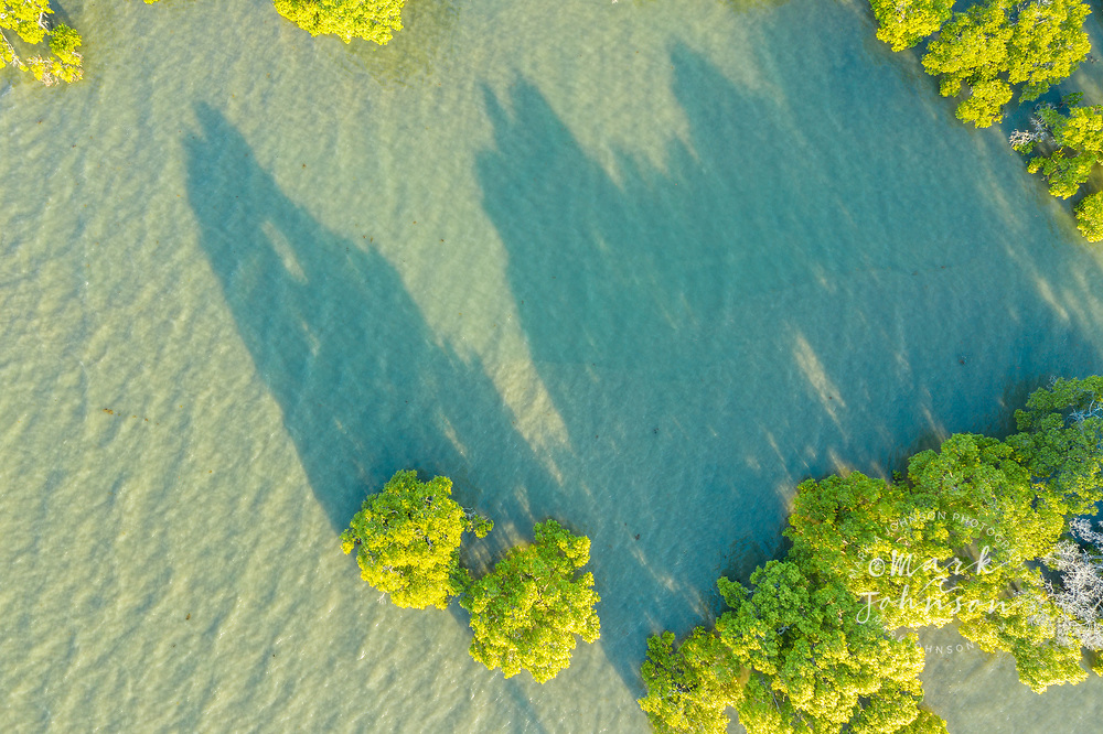 Aerial view of mangroves on Cassim Island, Moreton Bay, Cleveland,  Redlands, Brisbane, Queensland, Australia