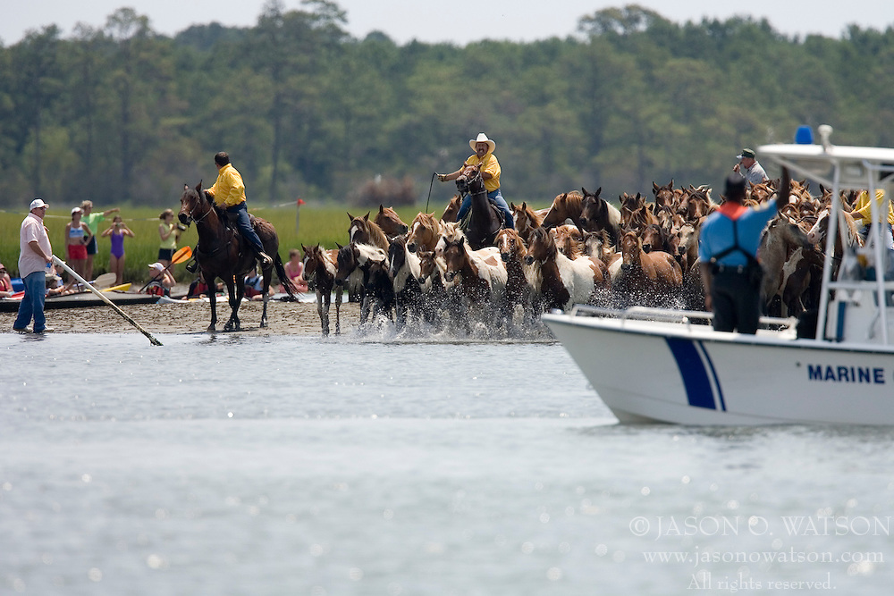 The 82nd Annual Pony Swim from Assateague Island across the Assateague Channel to Chincoteague Island was held on July 25, 2007.  Approximately 150 horses made the swim - from two herds (the northern herd in Maryland and the southern herd in Virginia).