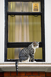 © Licensed to London News Pictures. 01/08/2018. LONDON, UK. Julian Assange's cat sits on a window sill outside the Equadorean Embassy in Knightsbridge.  The UK and Ecuador are holding ongoing talks over the fate of Wikileaks founder Julian, who has been in exile in the Ecuadorean Embassy since 2012.  He faces being arrested by UK police if he leaves the embassy for breaching bail conditions.  Photo credit: Stephen Chung/LNP