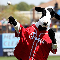 March 15, 2011; Port Charlotte, FL, USA; The Chick-fil-a cow throws the first pitch before a spring training exhibition game against the Florida Marlins at Charlotte Sports Park.  Mandatory Credit: Derick E. Hingle-US PRESSWIRE