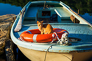 Fishing boat and cat at Soline, Mljet Island National Park, Dalmatia, Croatia