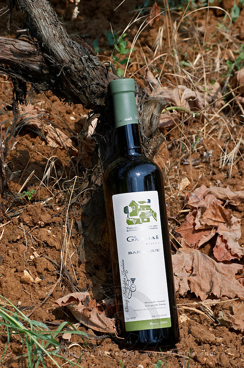 Bottle of Gangas Bijeli Barrique oak aged white wine, Zilavka, berba 2003 vintage. By the foot of a vine in the vineyard. Vita@I Vitaai Vitai Gangas Winery, Citluk, near Mostar. Federation Bosne i Hercegovine. Bosnia Herzegovina, Europe.