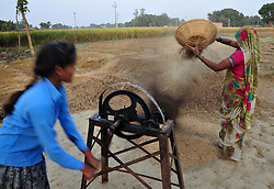 October 25, 2016 - Allahabad, Uttar Pradesh, India - Allahabad: A women farmer separates rice grains from the glumes, or husks using a traditional winnowing method at outskirts of Allahabad. Agriculture remains as important economic activity for the India, with wheat and rice being the main food crops. (Credit Image: © Prabhat Kumar Verma via ZUMA Wire)