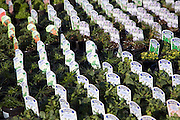 Potted labelled Alpine plants for sale in a garden centre, UK