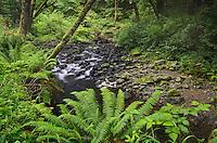 Oregon coastal forest Oswald West State Park