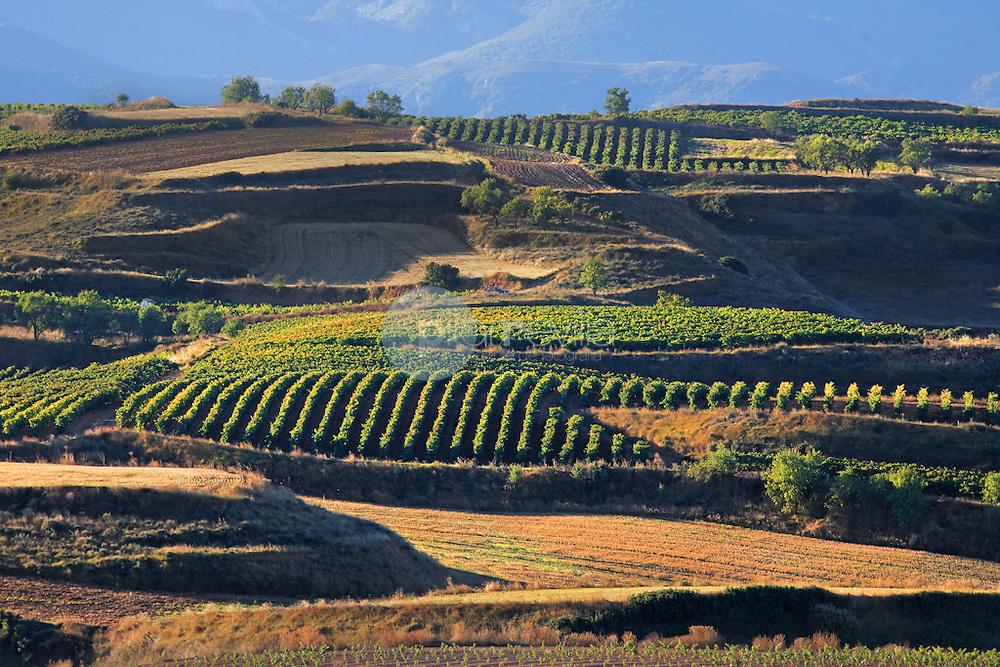 Viñedos. Badaran. La Rioja ©Daniel Acevedo / PILAR REVILLA