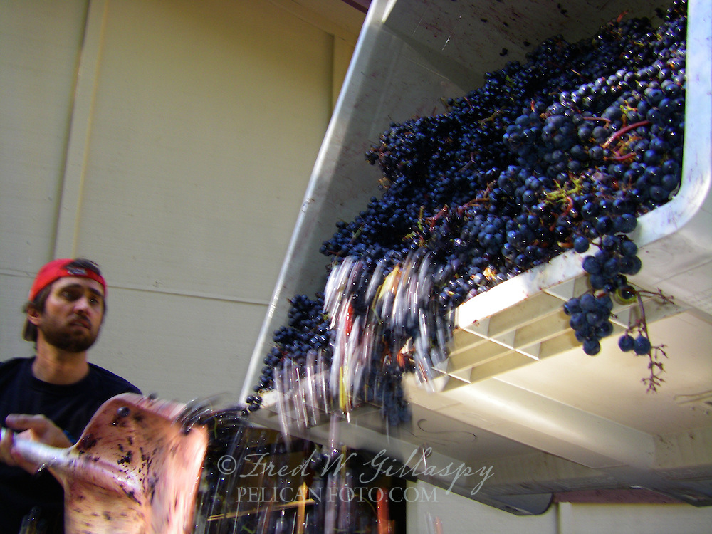 Wine Grape Harvest 2835