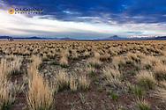 High deseret grasslands near Alvord Lake and Pueblo Mountains near Fields, Oregon, USA