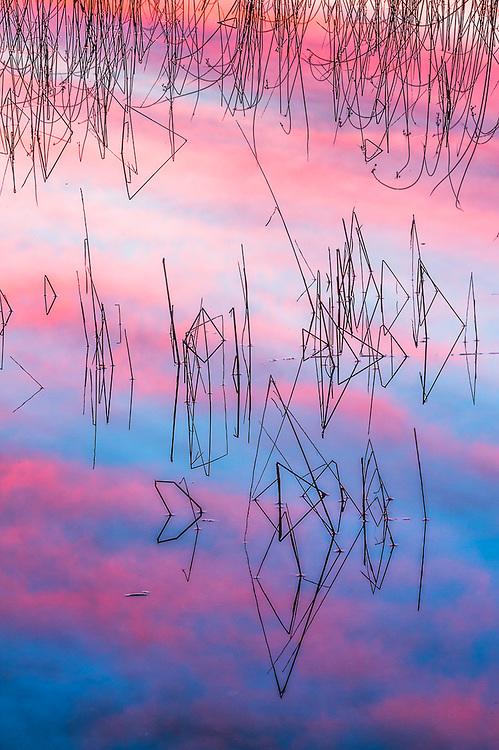 Shoreline reeds and clouds reflection, evening light, October, Schoolcraft Lake, Hubbard County, Minnesota, USA