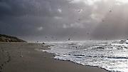 Sylt: Hörnum, 18.02.2020<br /> Strand, Sansibar, Gegenlicht, Möwen, Schatten, Nordsee<br /> © Torsten Helmke