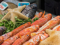 Fresh seafood for sale at fish market, Getxo, Algorta, Basque Country, Biscay, Spain, Europe